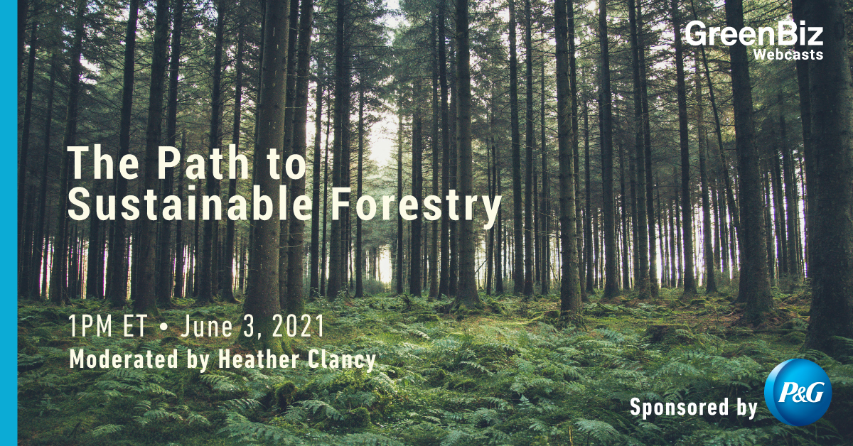 The Path to Sustainable Forestry